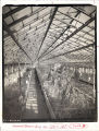 Greenhouse interior, Immanuel Deaconess Institute