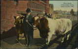 Prize cattle, Union Stock Yards, South Omaha, Neb.